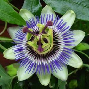 Τι σχέση έχει το λουλούδι; Διαβάστε ώς το τέλος!